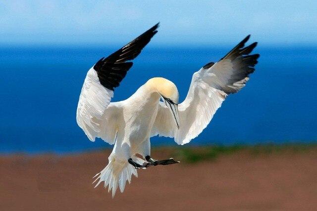 Flügel Blauen Himmel Heron Eisvogel Vogel Schwarz Und Weißen Federn ...