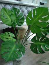 Artificial Monstera Green Leaves