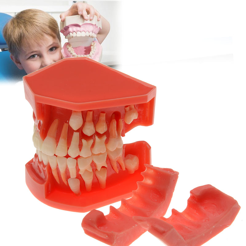 Dental Prosthesis Teeth Model Alternate Deciduous Teeth Primary and Permanent Demonstration Dental Simulator Dental Lab Tools soarday children primary teeth alternating transparent model dental root clearly displayed dentist patient communication