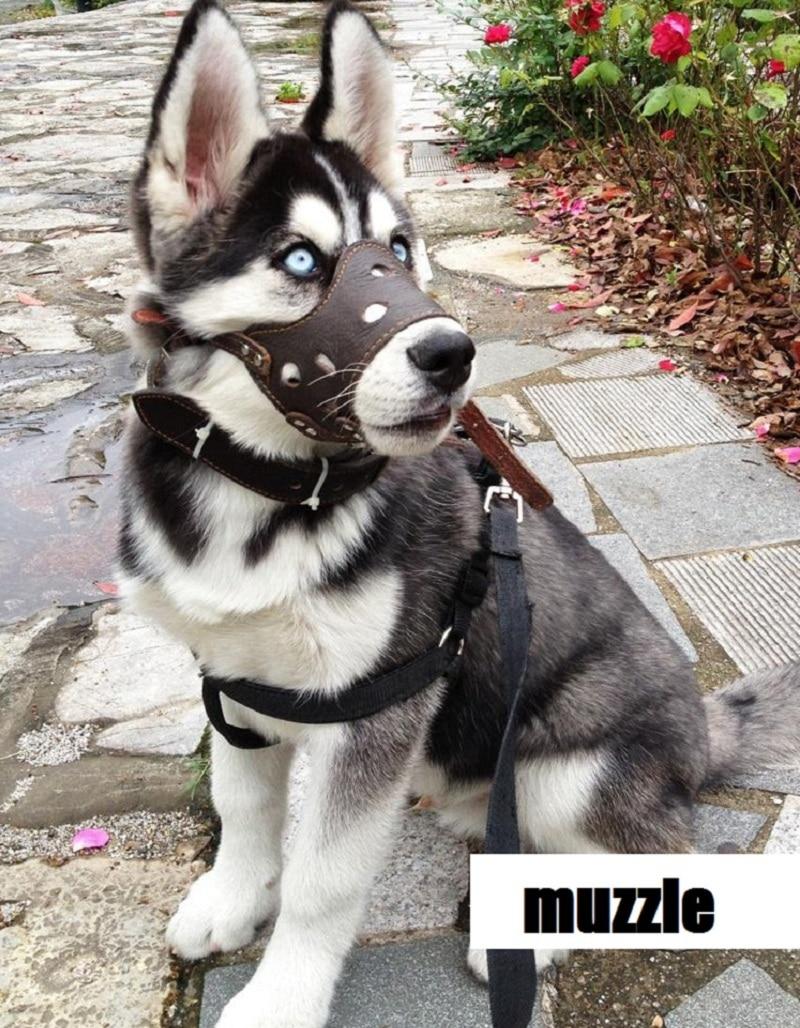 De calidad superior del perro bozal Anti mordedura de perro herramienta ladrido