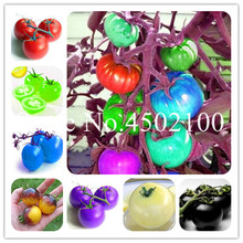 US $0.26 56% OFF|Bonsai 100 Pcs/Pack Rare Rainbow Tomato Bonsai, Sweet Organic Fruit Ornamental Potted Vegetable plants For Home & Garden -in Bonsai from Home & Garden on Aliexpress.com | Alibaba Group