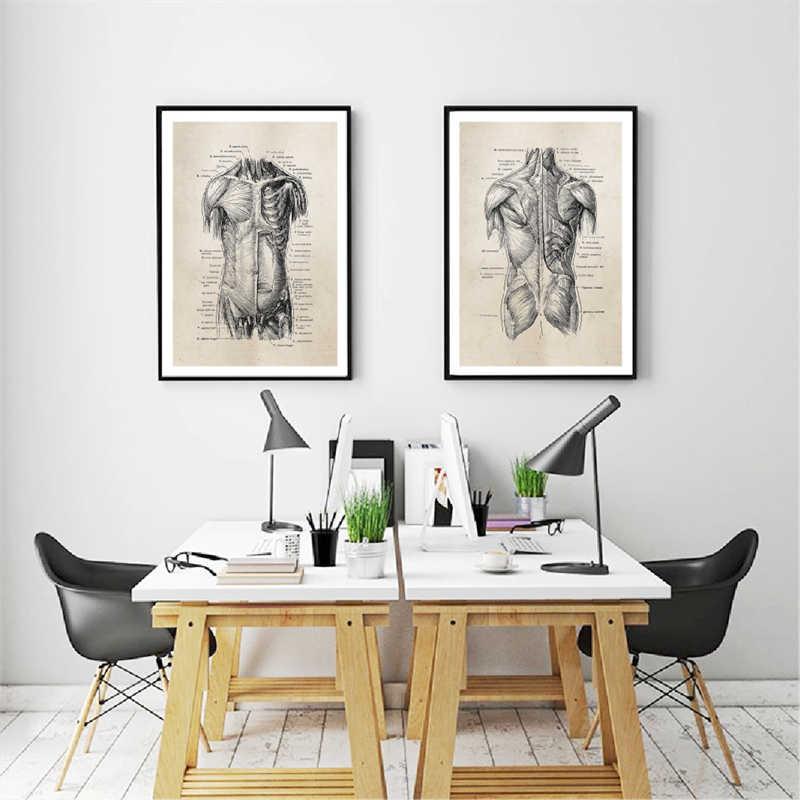 Menselijke Anatomie Canvas Art Prints En Poster, Retro Anatomie Poster Canvas Schilderij Wall Art Foto Medische Arts Kliniek Decor