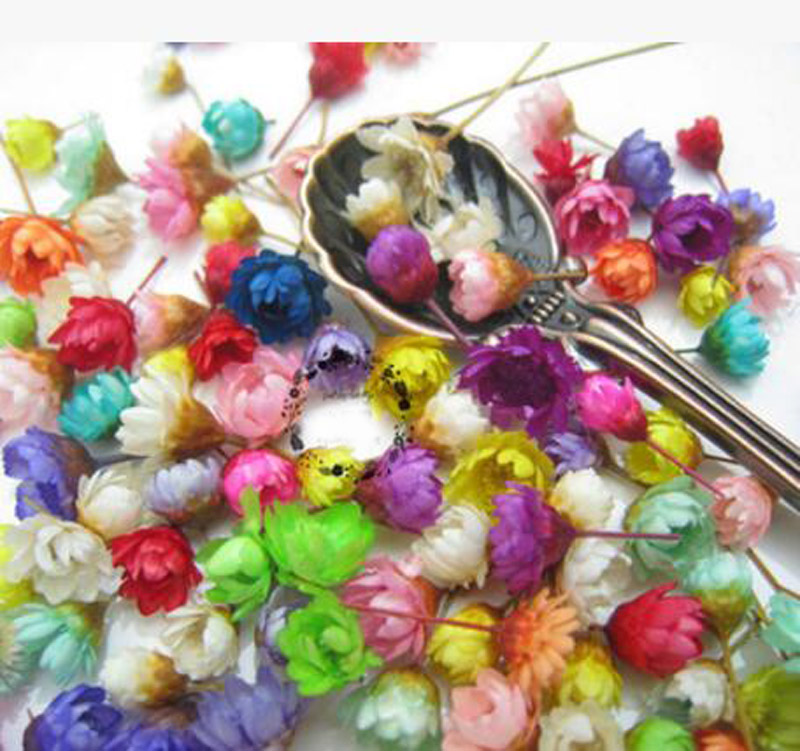 100pcs Mixed Colors Mini Dried Daisy Flower Head For Epoxy