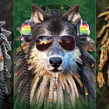 Funny Lion dog sunglasses 3D Flipping Pictures Holograms and