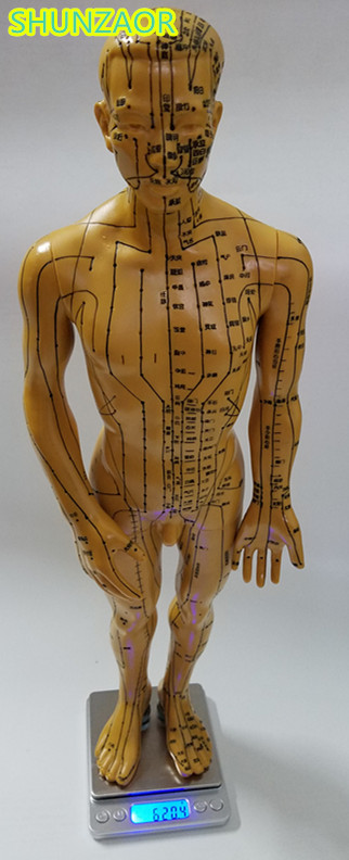 SHUNZAOR Meridian model human acupuncture point human body model 50cm Medical Education Appliances male