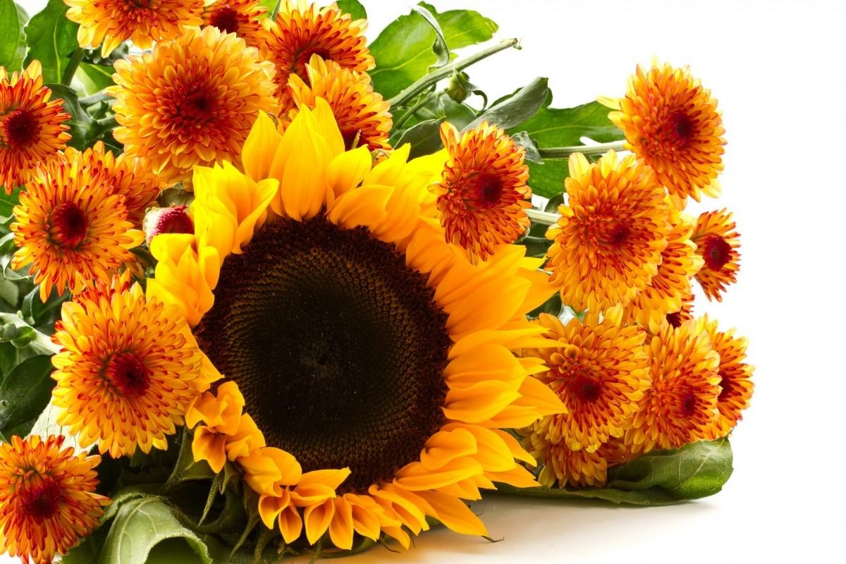 Красивые осенние картинки с цветами