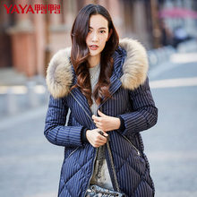 2016 new hot winter Thicken Warm woman Down jacket Coats Parkas Hooded Raccoon Fur collar Straight long plus size 2XXL  stripe