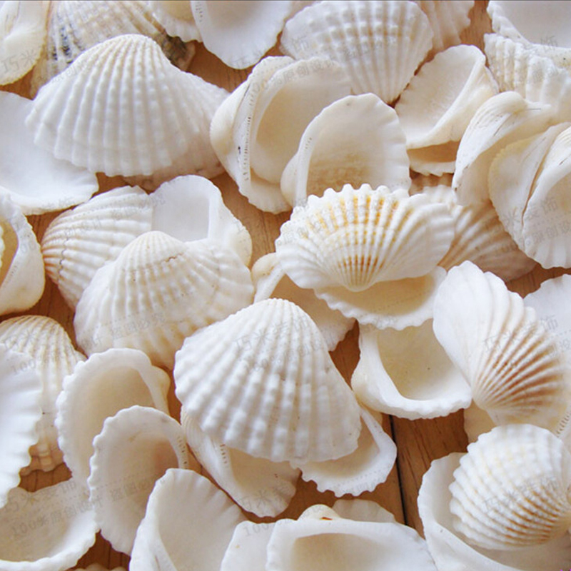 100pcs lot organic white seashell mediterranean diy polished natural conch decoration photo - Diy projects with seashells personalize your home ...
