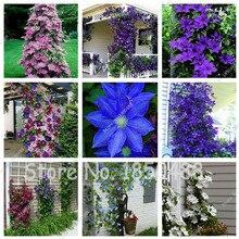 100PCS Garden Climbing Clematis Hybridas Flower Seeds Vines Bonsai Flower Seeds Planting perennial Flower plants for home garden