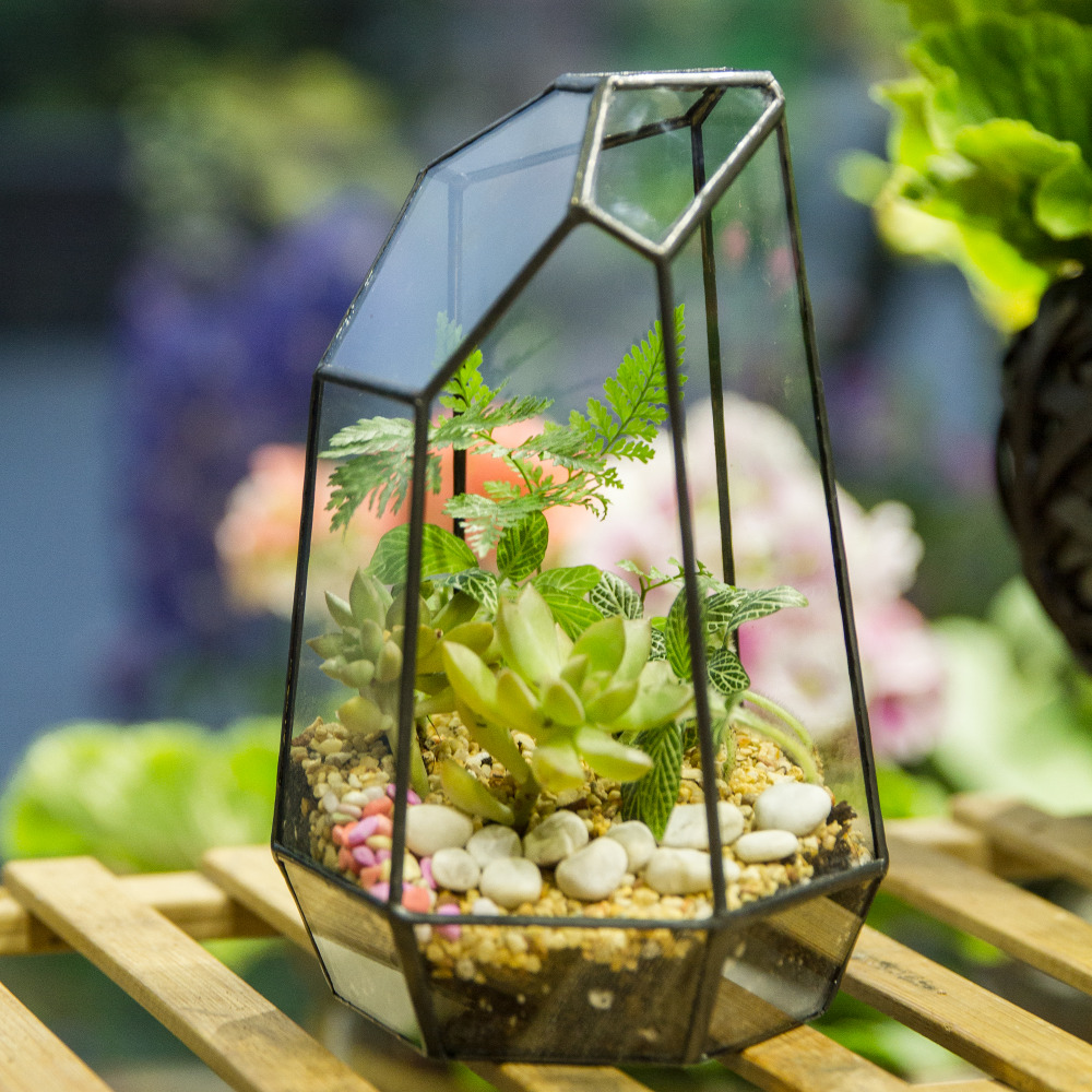 Glass Terrarium Planter Garden Tabletop Miniature Irregular Geometric Glass Flower Pot for Succulents Moss Ferns Plant Terrarium