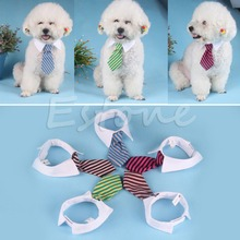Gentleman Pet Supplies Puppy Necktie