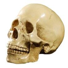 Modèle 1: 1 résine crâne anatomique enseignement décoration jaune