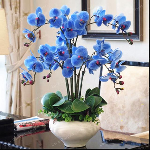 Orchid 100 Pcs Phalaenopsis Bonsai Perennial Flower Bonsai Home Garden Four Seasons Plants Bonsai Flowers Easy To Grow