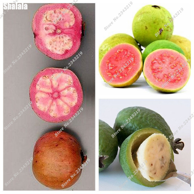 On Sale ! 10 Pcs Guava Seeds Delicious Japan Fruits Plant Thai Pink Fresh Red Guava Bonsai Tree Diy Plant Best Child Gift