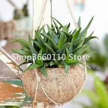 Sale 100 Pcs Green Aloe Vera Plants Edible Beauty Edible Cosmetic Vegetables And Fruit Bonsai Herb Tree Plants For Home & Garden все цены