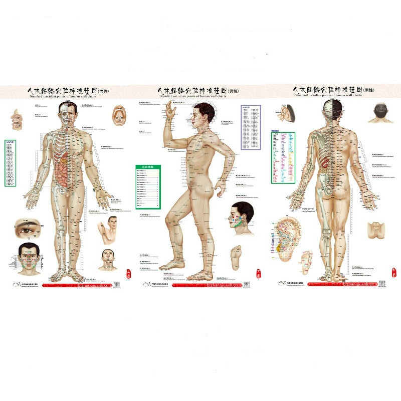 HD Bilingual Male Standard Meridian Points Of Human Wall Charts 3X (Front Side Back) Chinese And English For Self Care