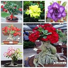 100% True Adenium Obesum Bonsai Exotic Desert Rose Flowers Balcony Desert-Rose MultiColor Petals Succulents Tree 1 Pcs