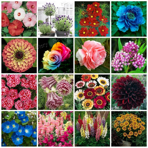 Buy 2900pcs flower seeds 16 varieties for Easy to grow outdoor plants