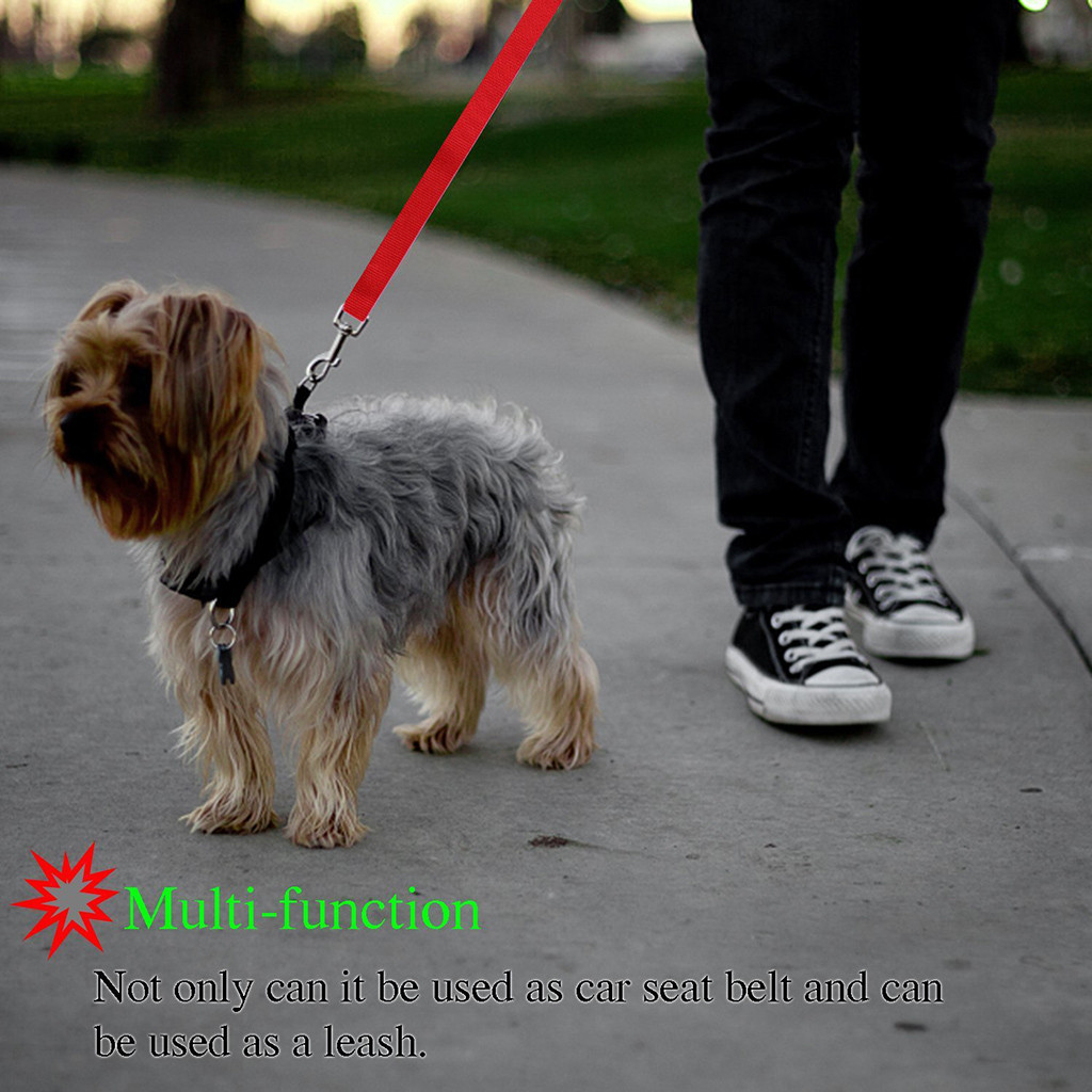 multi function leash use