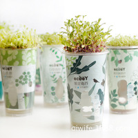 Ecoey Manufacturers Supply Broadwood Potted Plants Hydroponic Garden Mini Potted Indoor Gift Ideas
