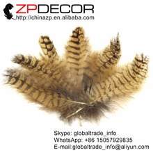 ZPDECOR 10-15cm 4-6inch 100pieces/lot Natural Beautiful Owl Eagle Feathers for Art Design