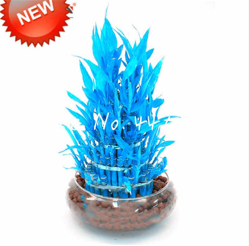 50 unidades/pacote Azul Bambu Bonsai Vaso Varanda Plantas De Bambu da Sorte Bela Casa Em Vasos de plantas Bonsai Para DIY Jardim de Casa