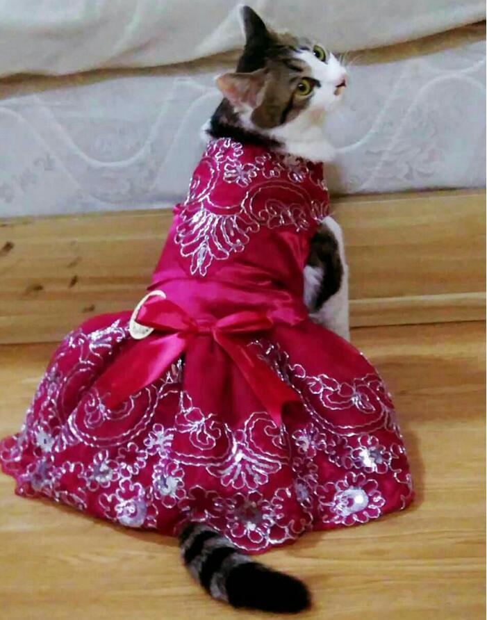 картинки котята в платьях салон