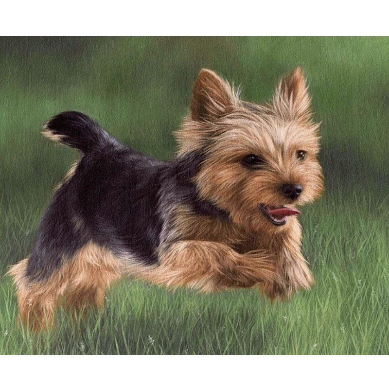 Full Square Diamond 5D DIY Diamond Painting yorkshire terrier Embroidery Cross Stitch Rhinestone Mosaic living room decoration