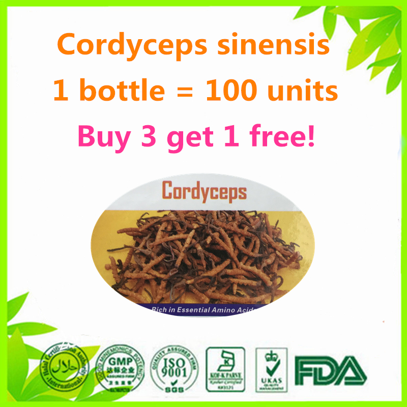 Hot seller 100 units Cordyceps sinensis mushroom (Cs-4) enhance immunity 100% Natural (Buy 3 get 1 free) cordyceps sinensis 50 1 extract 50% polysaccharides powder 17 6 oz 500g free shipping