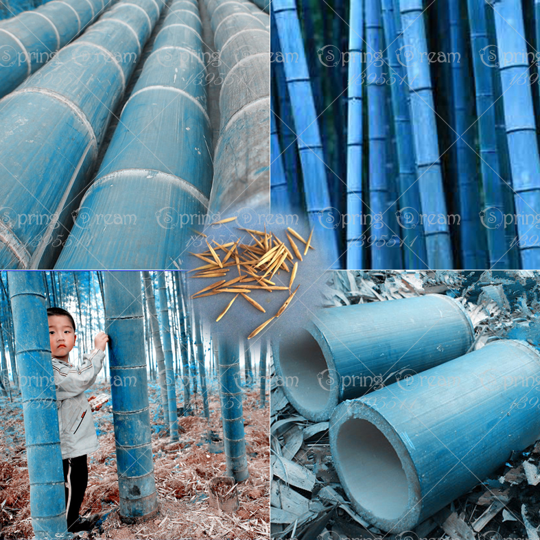popular blue bamboo