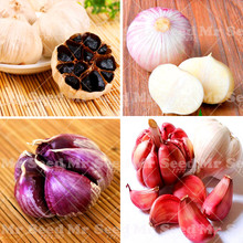100pcs Garlic seeds Organic seeds vegetables Kitchen seasoning food bonsai Is a vegetable plant has cancer fighting properties.