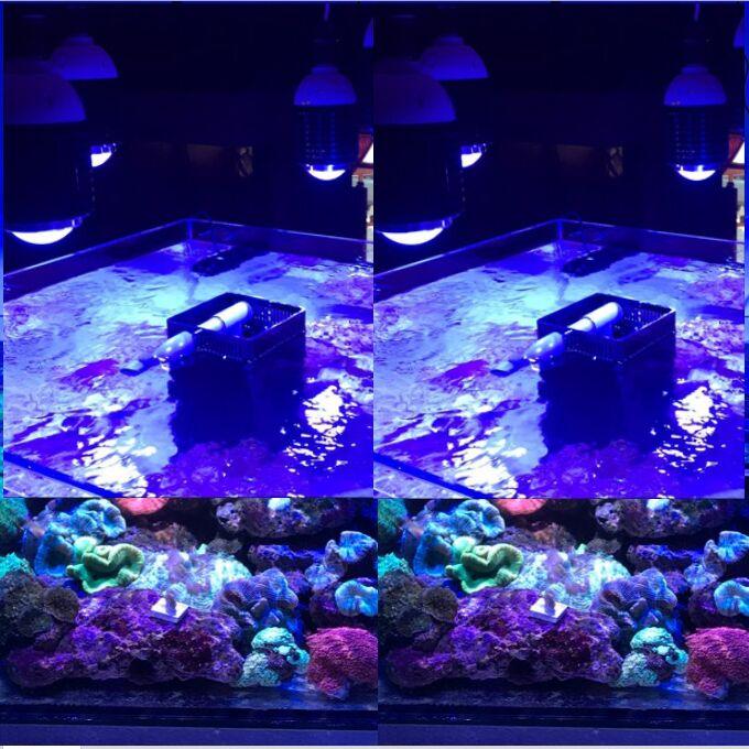 Lampe de croissance aquatique professionnelle légère de récif de corail marin d'alage SPS LPS de récif de corail de la puissance élevée 30 W CREE LED grand aquarium de corail