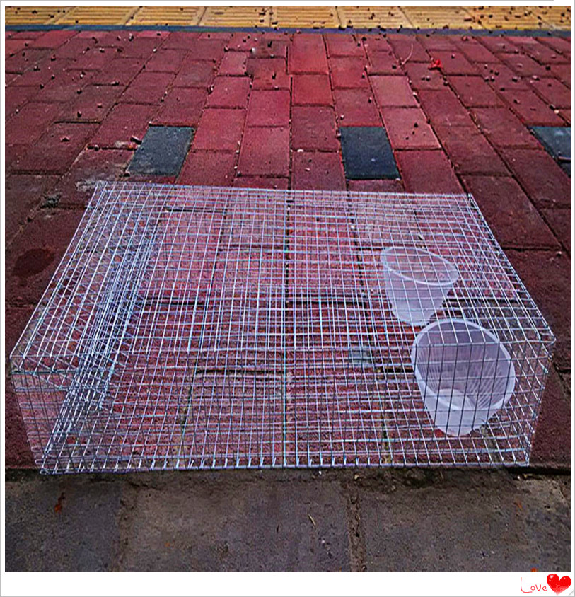 Best Sell High Quality  Snake trap/ King Cobra trap/Cobra cage/live catch snake trap with low price