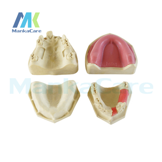 Manka Care - Made from special foaming materials and additives to simulate real mandible Oral Model Teeth Tooth Model цена