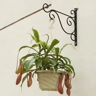 Europe style wrought iron wall hanging shelf outdoor balcony flower basket plant hanger hook hanging rack hook