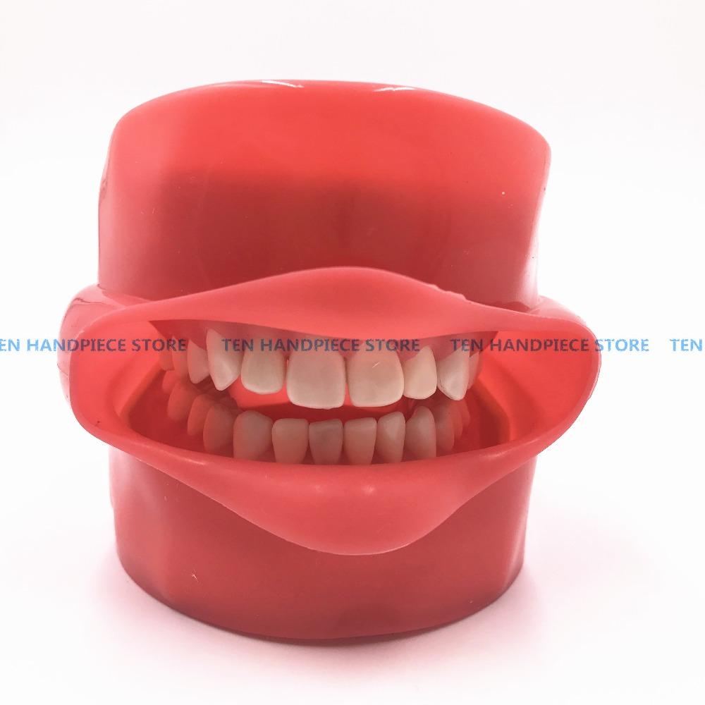 2018 good quality Oral Simulation Practice System Dental Phantom Head for Dental School