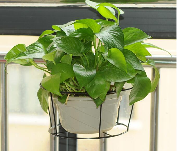New Flower Pots for Balcony Railings