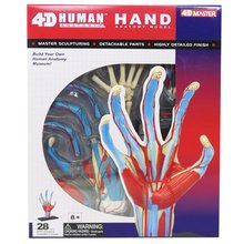 4D мастер человеческий череп ручной анатомический Скелет анатомическая позвоночник модель ps4 esqueleto humano anatomia с протезные зубы