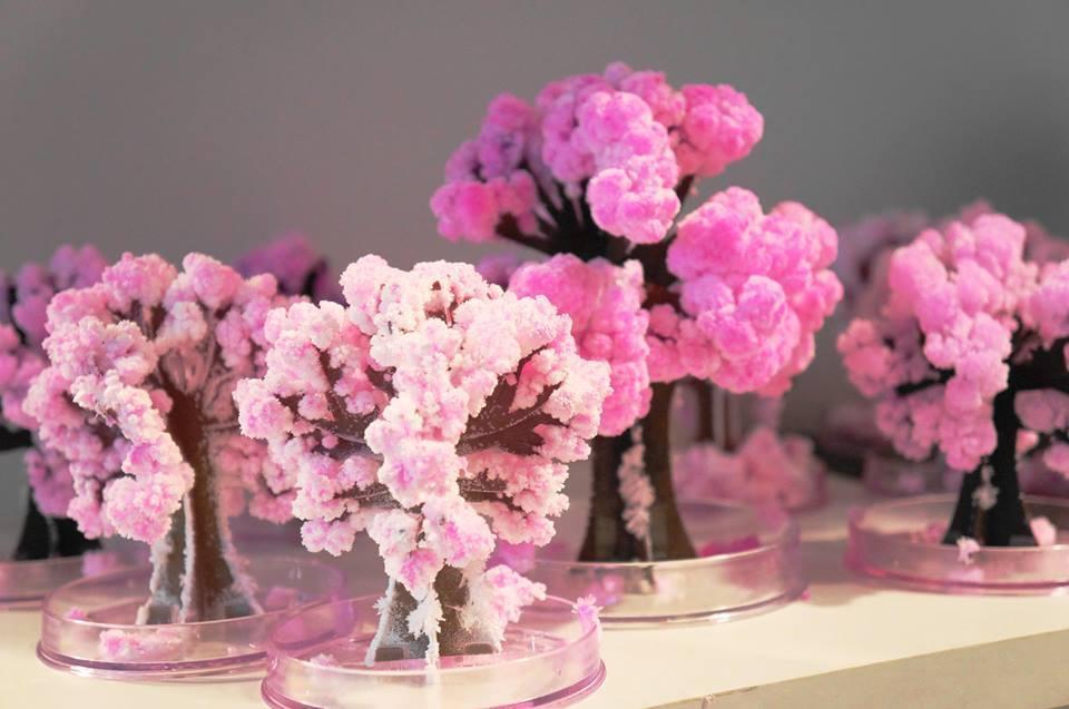 2017 14x11 cm Rosa Grande Crecer Magia de Papel Sakura Árbol Mágico - Nuevos juguetes y juegos - foto 2
