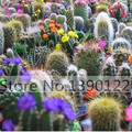100pcs Flower pots planters Celestial being seeds Ball cactus seeds Fairy Succulents Seeds .anti-Radiation