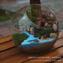 Moss micro landscape glass ecological bottle size round glass bottle mouth glass bottle Home decoration Desk Display girl toy