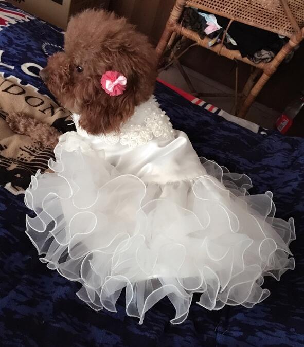 Kostumet e Nuseve Qeni Luksoze Princesha Qeni Qeni Dress Dasma Dress - Produkte për kafshet shtëpiake - Foto 2