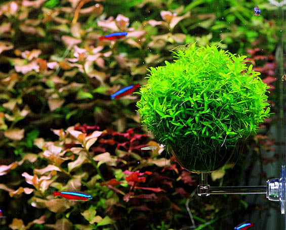 Online get cheap ada aquarium tank for Growing plants in water with fish