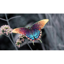Full Square Drill 5D DIY Beautiful colorful butterfly diamond painting Cross Stitch 3D Embroidery Kits  H105 full square drill 5d diy seaside volcano moon diamond painting cross stitch 3d embroidery kits h118