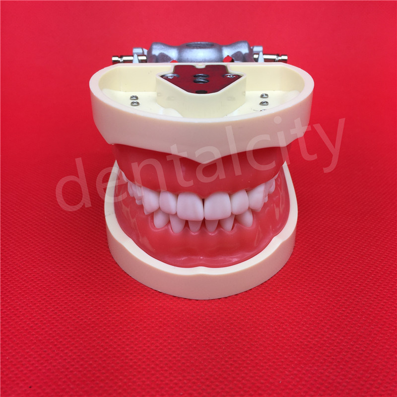 Free Shipping Teeth Teaching Model Dental Soft gingiva 200H Type Removable Teeth Model teeth model blue dental orthodontics communication model with 4 types of brackets