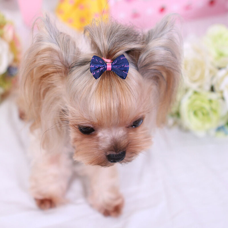 Great Ribbon Bow Adorable Dog - 100pcs-lot-Cute-Pet-Clips-Handmade-Ribbon-Dog-Hair-Accessories-Bows-6-Colors-1-38-inch  Best Photo Reference_177862  .jpg