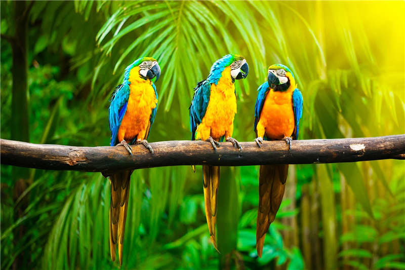 Best Nice Custom Beautiful Colorful Parrot Poster Home Decor Fashion Modern For Bedroom Wall Poster Wall