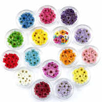 1 Box 20pcs Real Touch Dried Flower DIY Nail Art Decoration Jewelry Materials Small Plum for Wedding Party Supplies Random Color
