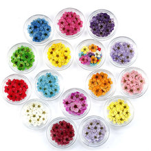 1 Box Real Touch Dried Flower DIY Nail Art Decoration Jewelry Materials Small Plum for Wedding Party Supplies Random Color