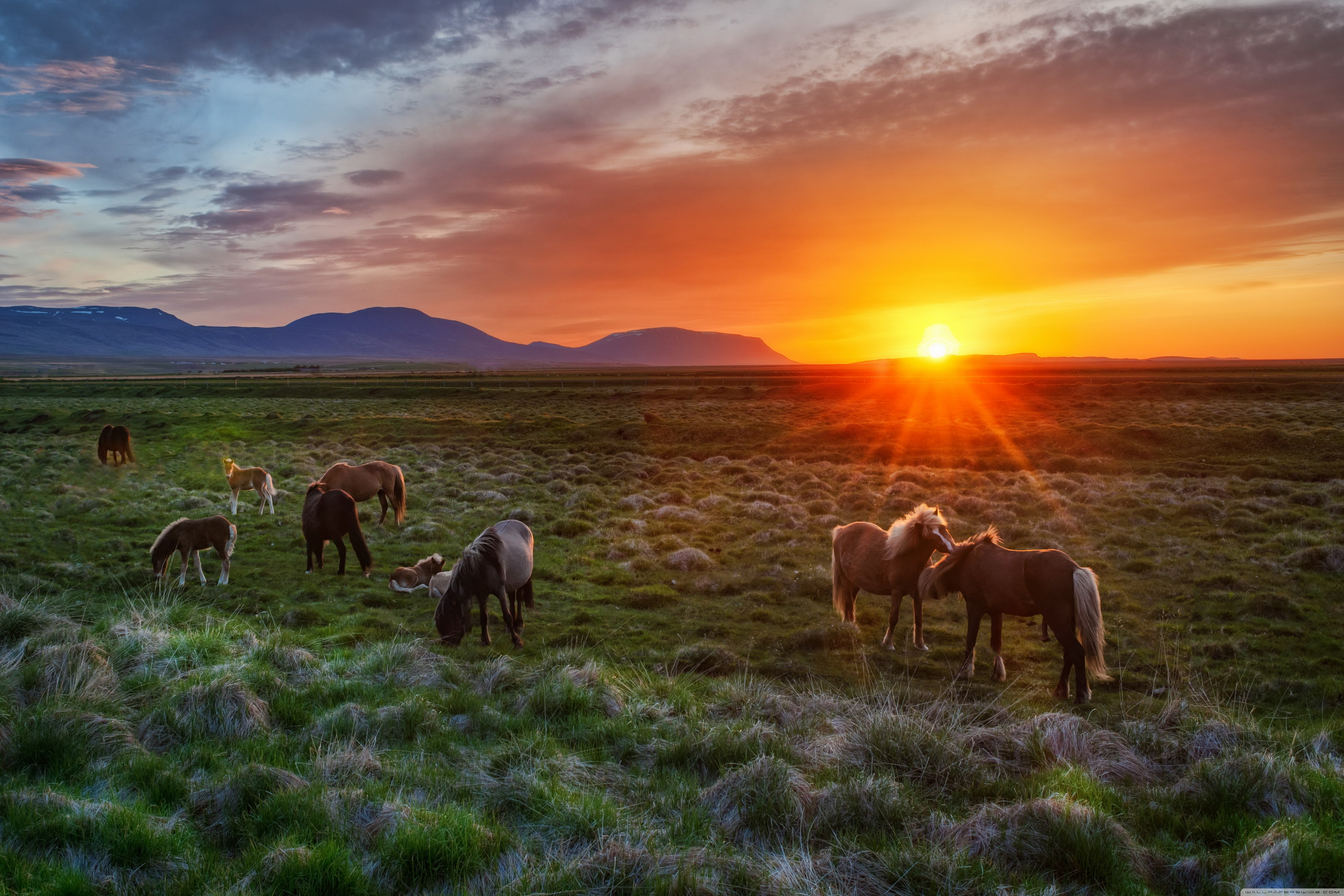 Home decoration wild horses at sunset Silk Fabric Poster Print 534FJ